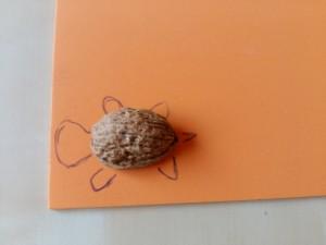 Tortuga (2)