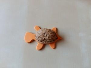 Tortuga (4)